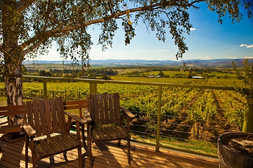 Yarra Valley in the Summer